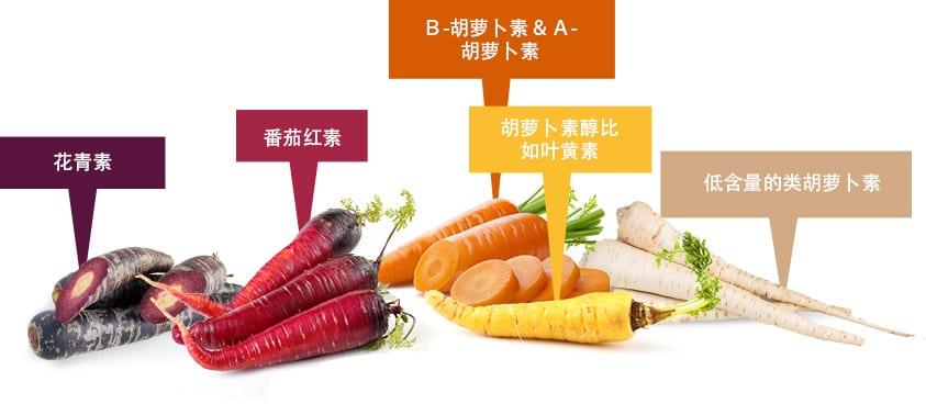 carrot-family
